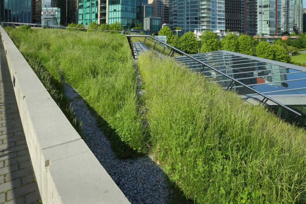 Green Roof Advantages and Disadvantages A Picture of a Thriving Green Roof with Solar Panels