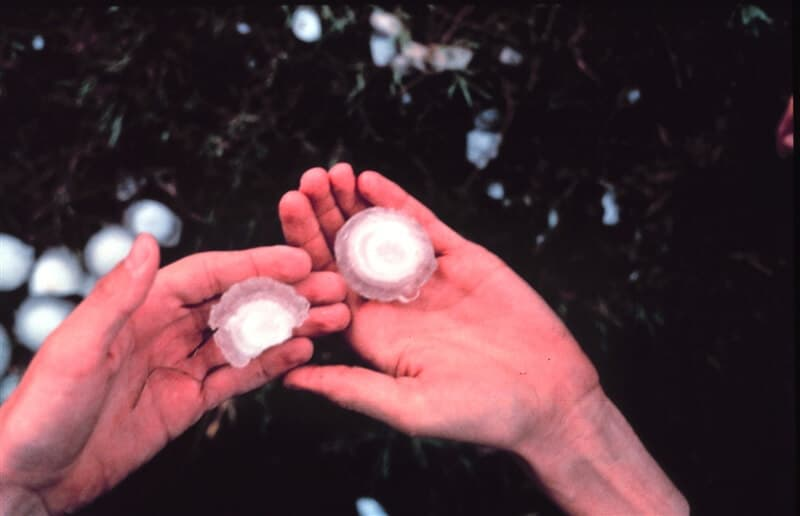 How Can You Tell if You Have Hail Damage On Siding? - A Man's Hands Holding Two Big Pieces of Hail